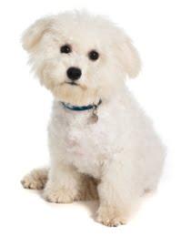 Cranbourne Dog Training School - FAQs