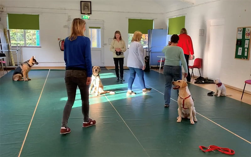 Group Puppy and Dog Classes