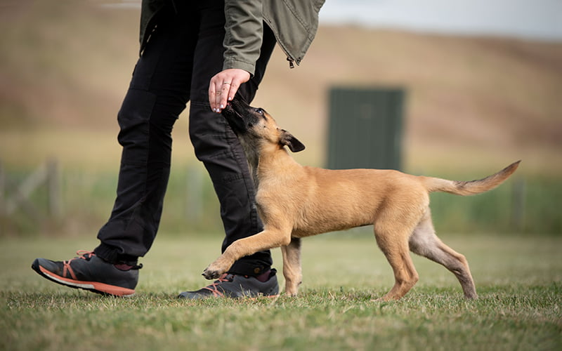 Private Puppy and Dog Lessons