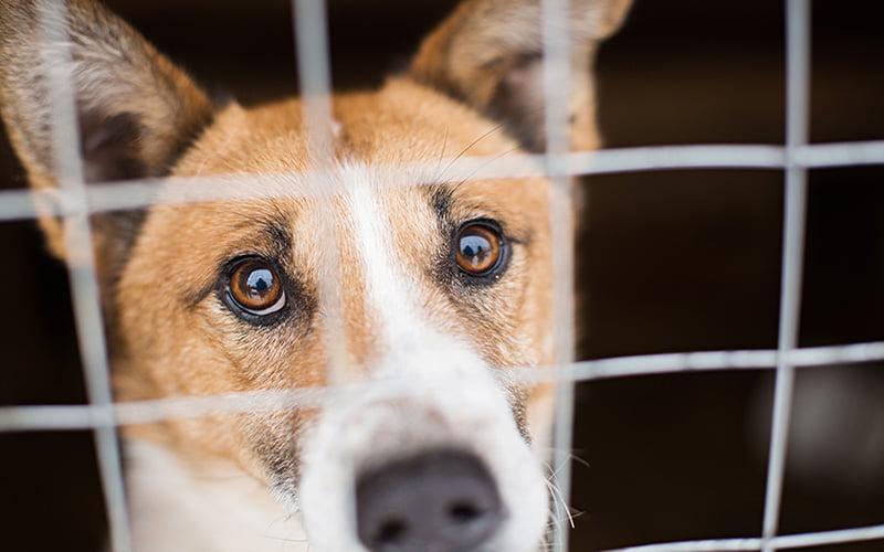 Rescue Dog Private Lessons